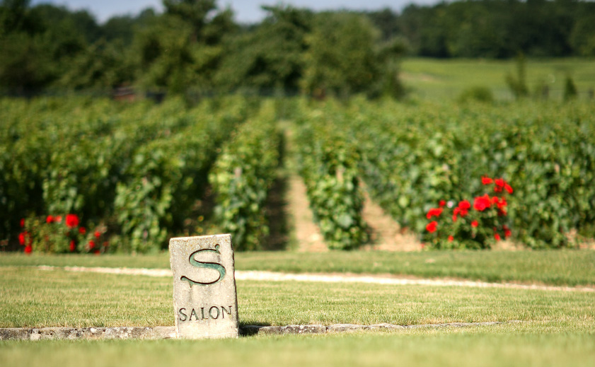 サロンのワイン | ワインショップ ドラジェ 本店