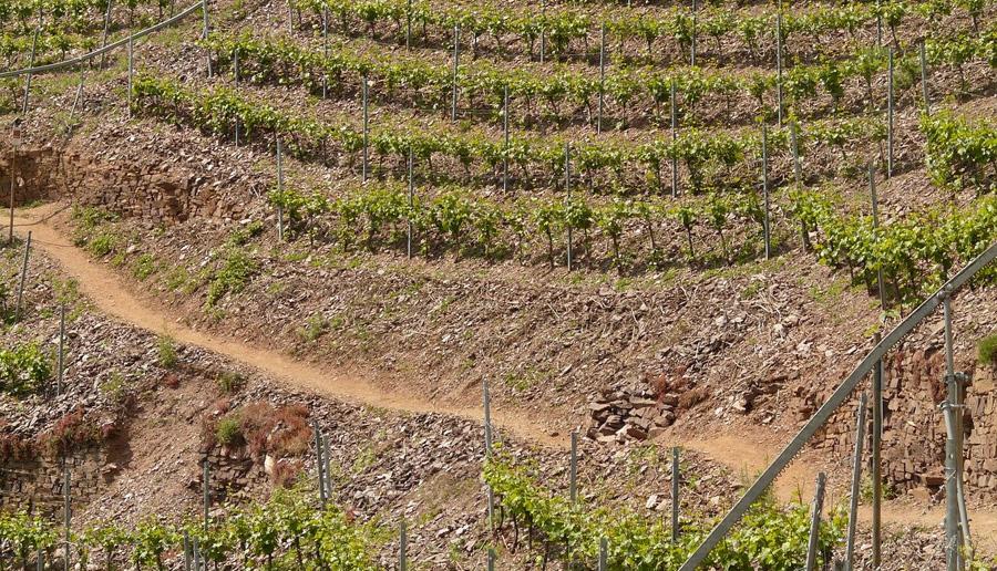 世界的に有名なワイン銘醸地の畑のオーナーになれるんです