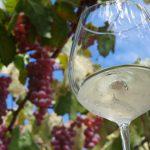 世界が認める日本固有ブドウ品種、甲州の魅力を再発見!