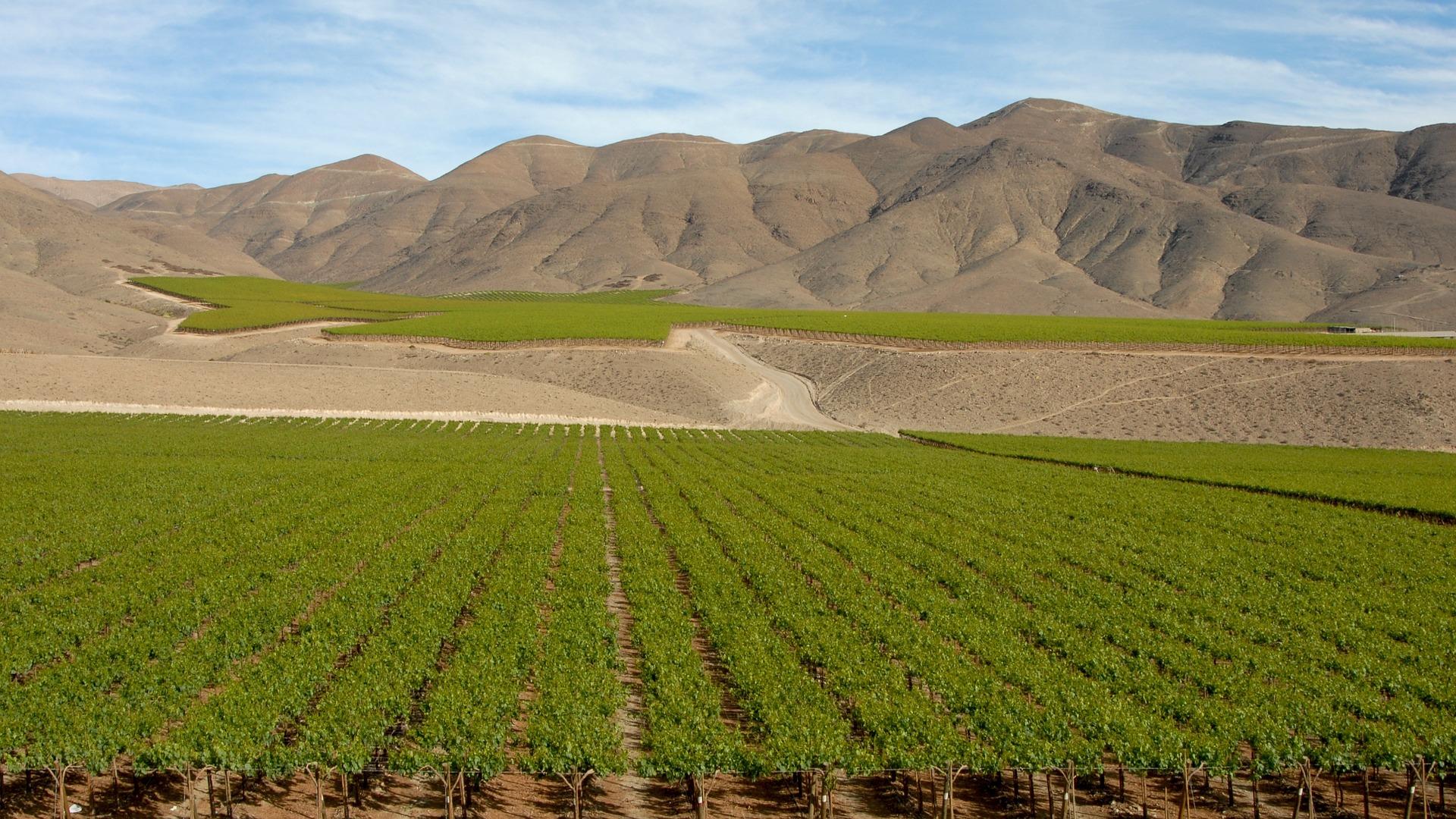 新世界ワイン産地