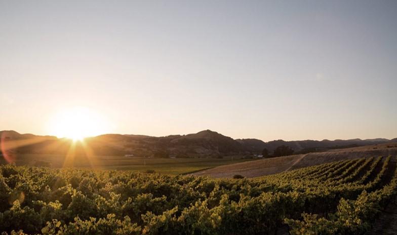 カリフォルニアの畑