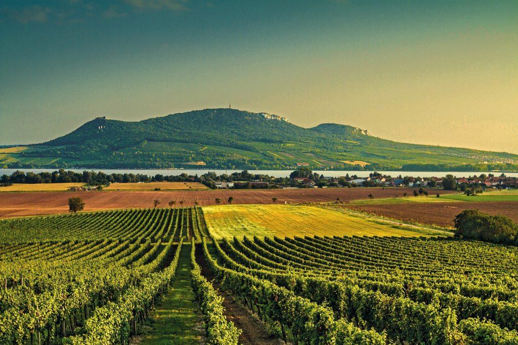 スパークリングワイン代表産地
